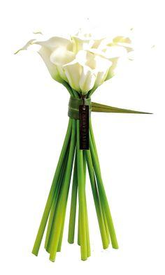 White Arums _