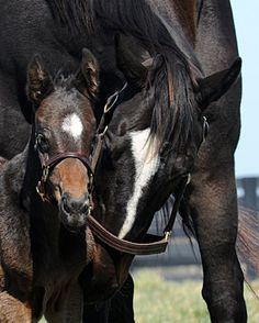 Zenyatta and baby