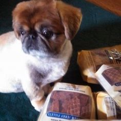 Petie is a contestant for True Chews Dog of the Week! #TrueChews