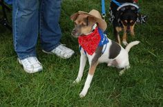 Cowboy is avaliable for adoptioh through Furry Friends Network. What else could he be but a cowboy! Pet Halloween Costumes, Pet Costumes, Daily Record, Costume Contest, Your Pet, Pets, Friends, Animals, Amigos