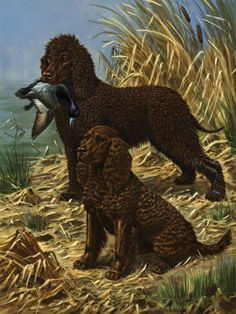 walter weber  Portrait of American and Irish Water Spaniels