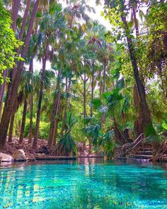 A dreamy-looking thermal pool surrounded by palm trees? We're jumping right in! 🌴💦 This perspective of the thermal pool that… Perth, Brisbane, Melbourne, Australia Visa, Australia Travel, Darwin Australia, Gold Coast Australia, Alice Springs, Hot Springs