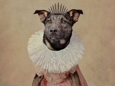 Homeless dogs pose in outlandish costumes to attract new owners Shelter Dogs, Animal Shelter, Rescue Dogs, The Shelter Pet Project, Dog Poses, Homeless Dogs, Colorful Animals, Cute Costumes, Animal Projects