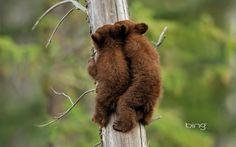 медвежонок лезет на дерево - Поиск в Google