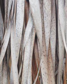 palm textures | briarwinters | VSCO Grid