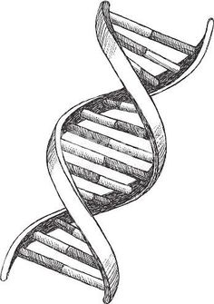 Vector illustration of DNA. Vector illustration of DNA. Biology Drawing, Dna Drawing, Biology Art, Pencil Art Drawings, Dna Tattoo, Dna Project, Tattoo Project, Project Ideas, Arte Dna