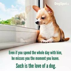 the love of a dog.....