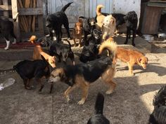 This is the Dog Rescue Shelter Mladenovac in Serbia. We have helped recently with a delivery of food and flea and tick medicines.