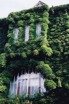 tschoenn (flickr) Overgrown ...nature reclaiming