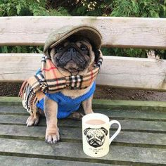 Must have this pug !