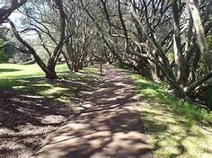 Auckland Domain walk, Auckland Domain nz