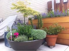 A favorite corner In the garden