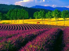 Provence Mon Amour fr y