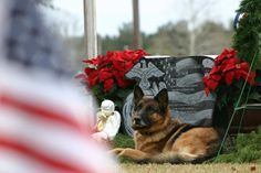Go to Seal of Honor on Facebook for the story of this Military Dog & his beloved Soldier