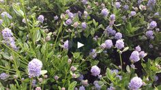 How To Attract Bees Into Your Garden. on Vimeo