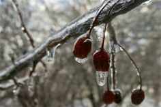 An ice storm in Jane's garden in Maine--click through to see more of this garden!
