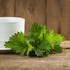 Stinging Nettle Part What It Is And. Its Health Benefits! Holistic Remedies, Natural Home Remedies, Natural Healing, Herbal Remedies, Nettle Benefits, Health Benefits, Seasonal Allergies, Growing Herbs, Edible Flowers