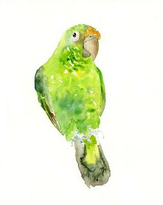 PARROT  by DIMDI Original watercolor painting 8x10inch (Vertical orientation). $35.00, via Etsy.