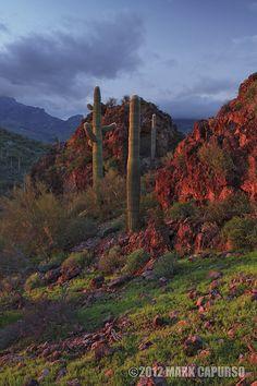 RGB by Mark Capurso, via 500px; Cave Creek, Arizona