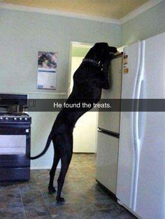 He is really big!!!                                                       …
