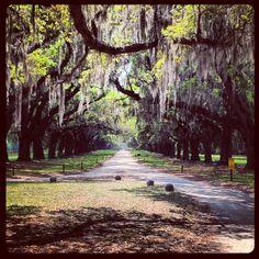 Charleston, SC - Boon Plantation drive