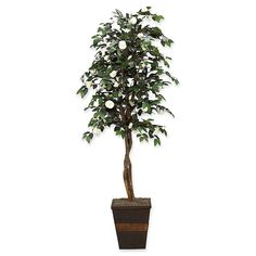 The D&W Silks Camellia Tree with Cream Flowers in Wooden Planter makes it simple to add a splendid touch of green to any home or office space. Ivy Plants, Foliage Plants, Faux Plants, Green Plants, Potted Trees, Flowering Trees, Camellia Tree, Ficus Tree, Boxwood Topiary