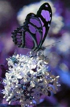 Shades of purple and white