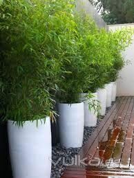 Resultado de imagen para imagenes de que sembrar en una jardinera