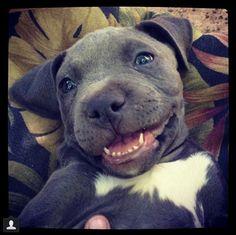 Happy heart Happy pup❤❤
