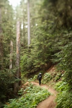 """IMG_3444-1"" by jgroepper on Flickr - a hike through a green forest"