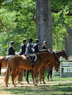 The lineup in the Amateur Owner hunter ring.