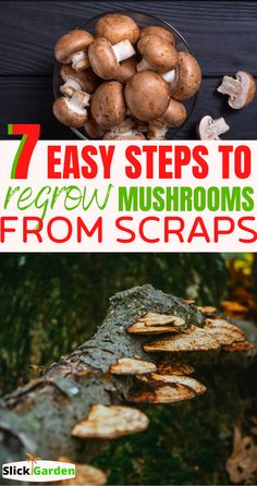 Edible Wild Mushrooms, Grow Your Own Mushrooms, Growing Mushrooms At Home, Garden Mushrooms, Stuffed Mushrooms, Vegetable Garden For Beginners, Gardening For Beginners, Mushroom Kits, Mushroom Cultivation