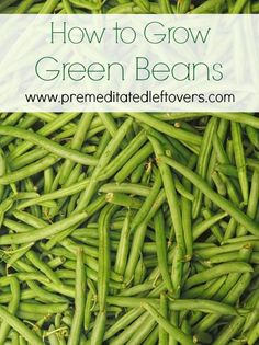 How to Grow Green Beans, including how to plant green bean seeds, how to transplant and care for green bean seedlings, and how to harvest green beans.