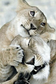 So affectionate; every animal craves love.
