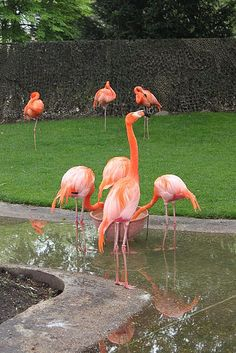 Antwerp Zoo #Belgium #Zoo #beautifulplaces