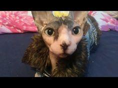 Eat my cats Betty - YouTube