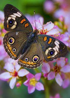 Happy Little Butterfly by Saija Lehtonen
