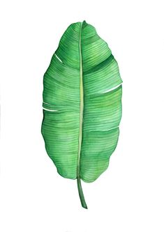 Image of Banana Leaf Leave In, Botanical Flowers, Botanical Prints, Plant Texture, Plant Aesthetic, Leaf Drawing, Watercolor Plants, Monstera Deliciosa, Painted Leaves