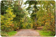 Goede foto's maken in het bos blijft een uitdaging. Met deze 10 handige tips kun je meteen aan de slag en zie je direct resultaat!   Fotografie tips bos