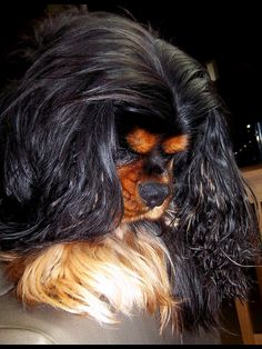 Cecil, a Black & Tan, Cavalier King Charles Spaniel - Baron looks just like him! Cavs are the best dogs for the family! King Charles Puppy, Cavalier King Charles Dog, King Charles Spaniel, Cavalier King Spaniel, Cocker Spaniel, Best Dog Breeds, Dogs And Puppies, Doggies, Beautiful Dogs