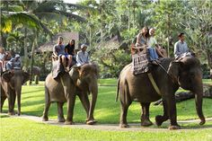 Bali Wildlife & Marine Park.
