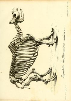 t. 2 (1812) - Recherches sur les ossemens fossiles de quadrupèdes : - Biodiversity Heritage Library. http://biodiversitylibrary.org/page/40030090. #FossilStories