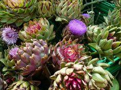 Colesterolul mărit se tratează cu anghinare Clay Soil, Edible Garden, Artichoke, Perennials, Globe, Cancer, Vegetables, Flowers, Gardening