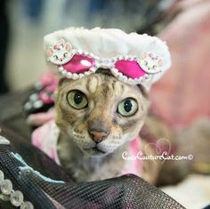 Coco, the Couture Cat: Fashion Friday, Ocean City Style Social Media Conference, Pet Fashion, Cat Walk, Ocean City, City Style, Fundraising, Pitbulls, Friday, Couture