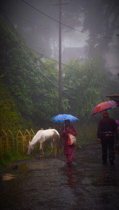 Rainy day, Darjeeling, North of India Rainy Day Photography, Travel Photography, Namaste, India Facts, Amazing India, Darjeeling, India Tour, Hill Station, India Travel