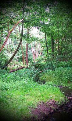 Dönche, Naturschutzgebiet