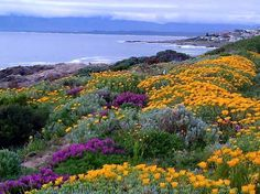 Overberg Clifton Beach, Provinces Of South Africa, African Inspired Fashion, Country Scenes, Africa Travel, Beautiful Places, Beautiful Flowers, Continents, Travel Inspiration