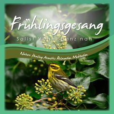 cd birdsong Worlds Greatest holographic psychoacoustics atmosphere with glamor, sound experience nature sounds Atmospheric tone images Chakra Balancing, Geometric Patterns, Nature Sounds, Holographic, Virtual Reality, World, Image, Consciousness, Healing