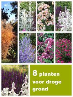 Op zoek naar droogtebestendige vaste planten voor je border? Dit zijn mijn favorieten! Hardy Plants, Drought Tolerant Plants, My Secret Garden, Edible Garden, Garden Styles, Garden Projects, Garden Inspiration, Gardening Tips, Eco Friendly