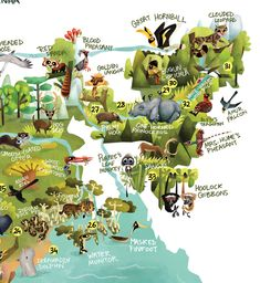115 animals, 46 biodiversity hotspots, one giant illustration- here is the Wildlife Map of India, out on Green Humour to mark the Wi. Wild Life, India Map, India Travel, Wildlife Of India, Wildlife Protection, Life Map, Geography Map, Clouded Leopard, Tourist Map